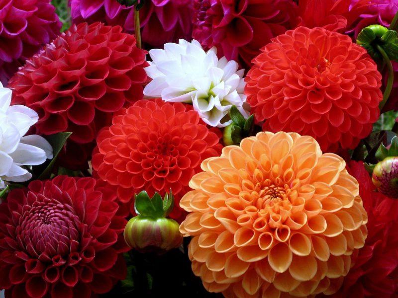 Çiçek Göndermek Artık Bir Tık Kadar Kolay